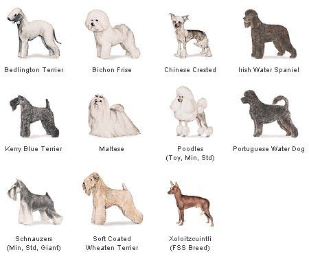 non allergenic dogs hypoallergenic dogs dogs for with allergies obedience