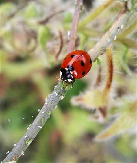 garden pests uk top ten garden insects ecologists ask the