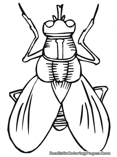 Realistic Insect Coloring Pages Realistic Coloring Pages Insect Coloring Page