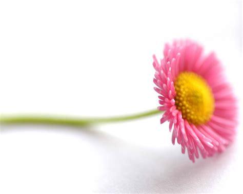 beautiful flowers image flowers for flower lovers beautiful flowers desktop