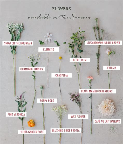 7 Types Of Flowers To For A Winter Wedding by Seasonal Flower Guide Summer
