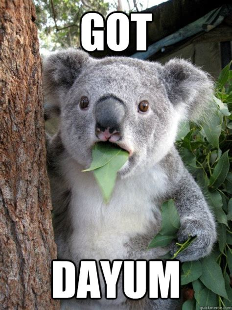 Dayum Girl Meme - got dayum disbelief koala quickmeme