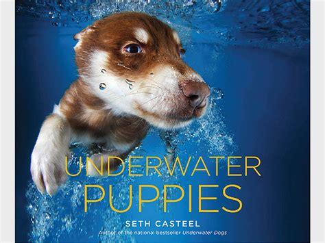 underwater puppies underwater puppies book photos by seth casteel