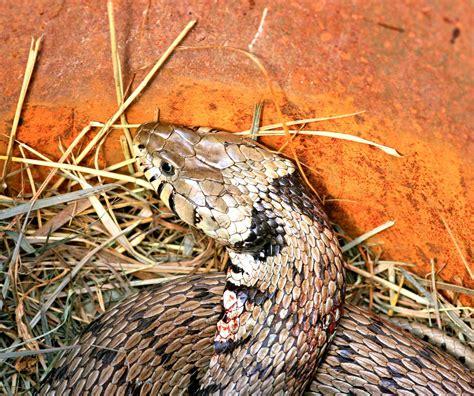 talpe in giardino cosa fare un serpente in giardino che fare cose di casa