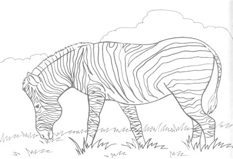 zebra coloring page printable free printable zebra coloring pages for kids