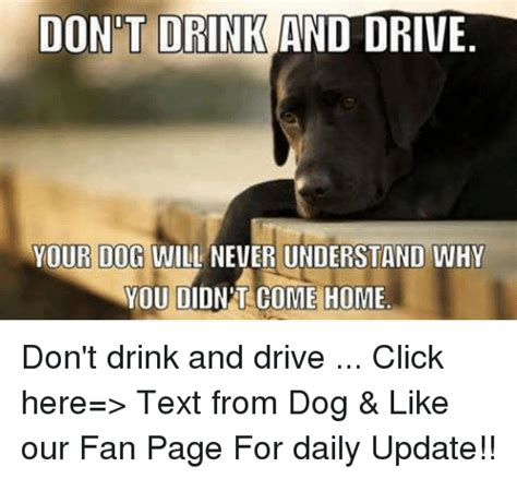 T Dog Memes - funny drinking and driving memes of 2017 on sizzle