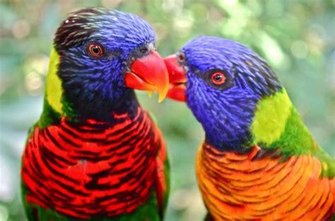 update harga burung nuri terbaru   jenis