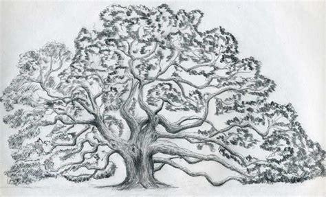 oak tree drawing tree drawing 3d drawing