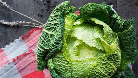come si cucina la verza ricette con verza ricette di