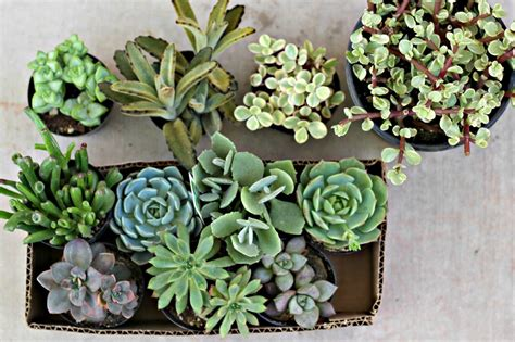 success with succulents choosing growing and caring for cactuses and other succulents books how to care for succulents organize and decorate everything