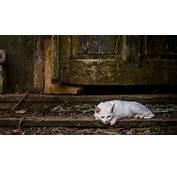 Abandoned Cat Desktop Background HD 2048x1357  Deskbgcom