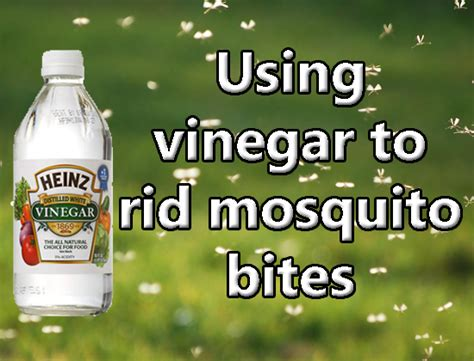 get rid mosquitoes backyard how do i get rid of mosquitoes in my backyard 28 images
