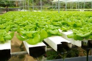 a hydroponic gardening primer grow it