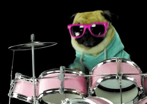 pugs and drummers when your has to the dogs forever