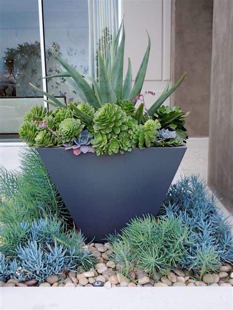 Succulent Container Gardens by Succulent Pot Succulents
