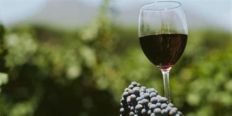 best rioja wine wines of rioja launches top wines list and awards imbibe