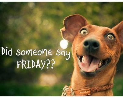 Friday Dog Meme - it friday funny quotes quotesgram