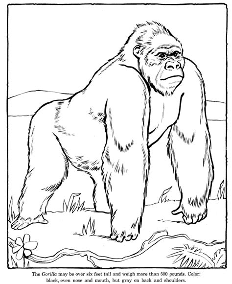 zoo animal coloring pages for toddlers zoo coloring pages coloring kids