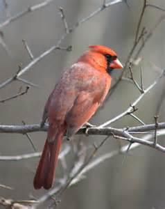 arizona bird identification ehow uk