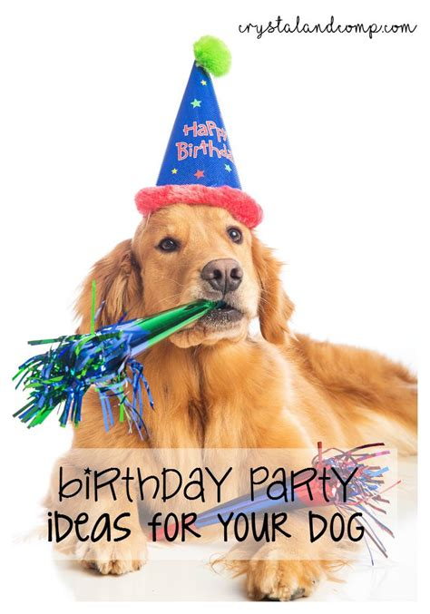 Birthday Surprises For Your Pet by Birthday Ideas For Your Crystalandcomp