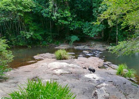 gardeners falls maleny things to do in maleny travel2next