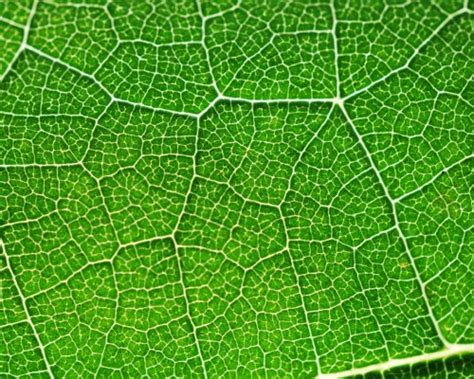 how to create light without electricity photosynthesis for kids cool kid facts