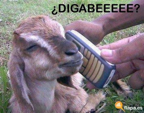 Cabra Meme - flapa el blog de humor etiqueta cabra