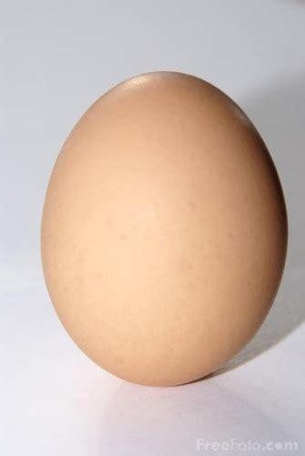 Mr Egg mr egg hi im an egg