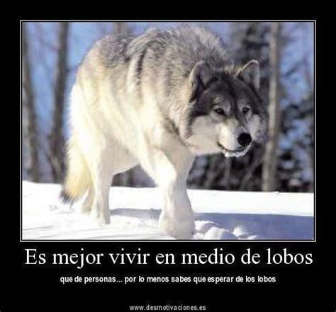 imagenes con frases de amor con lobos frases de lobos imagui