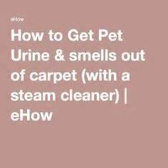 how to get pet urine smells out of carpet with a steam cleaner carpets steam cleaners and