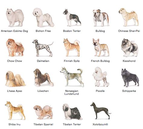 non sporting dogs picture 1 list of breeds picture
