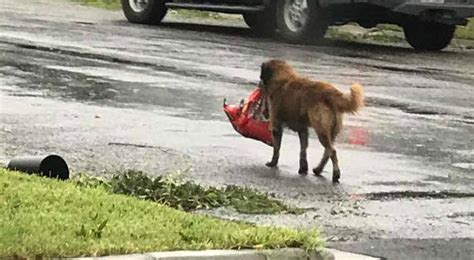 puppies houston houston pastor intercedes like elijah as flood waters devastate houston charisma news