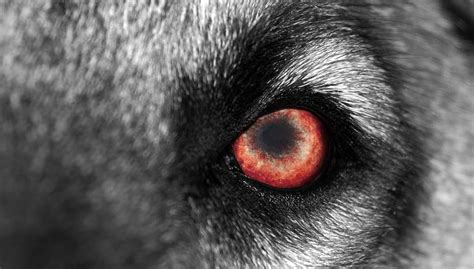 fear of dogs how to overcome fear of dogs cynophobia in adults and children top tips