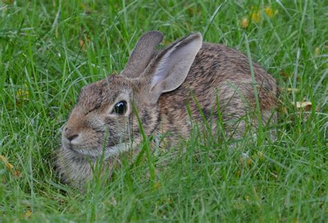 rabbit in backyard jstookey s blog jstookey com