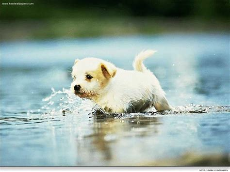 puppy water puppies scenery