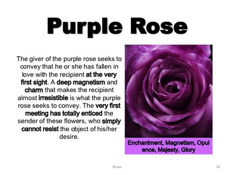 Deep Purple Color by Roses