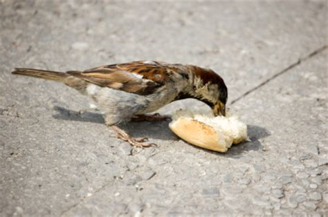 top 28 can seagulls eat bread image gallery seagull