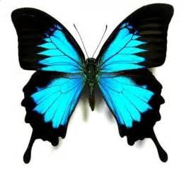 mariposas pics decoraciones con mariposas lacelebracion