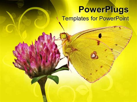 Moving Butterfly Animation For Powerpoint Www Pixshark Com Images Galleries With A Bite Moving Butterfly For Powerpoint