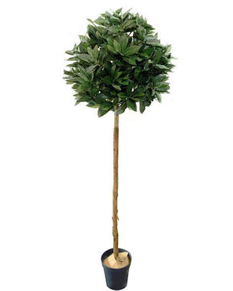 Bay Tree Planter by Amazing Artificial Bay Trees From The Uk S Premier Supplier