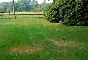 Rasen Braune Stellen 4934 by Wir Sind Im Garten