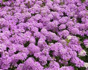 Pictures Of Pot Plants Flowering - flowers amp ornamental plants