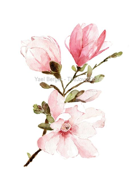 magnolia watercolor painting mongolia flowers watercolor