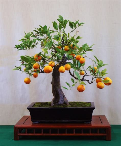 fruit tree ideas make an effortless but useful decoration with these 15
