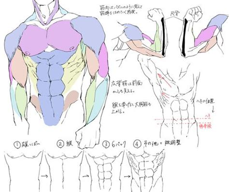 watercolor tutorial pixiv 29 tutorials on muscles on pixiv http www pixiv