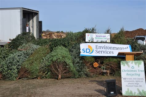 christmas tree recycling clairemont times