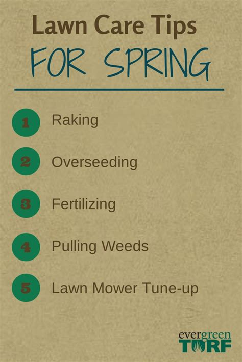 summer lawn care tips 27 best images about spring summer lawn care on