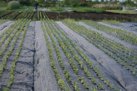 heavy duty landscape fabric growing with landscape fabric floret flowers