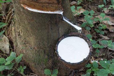 miglior materasso in lattice naturale miglior materasso in lattice opinioni miglior materasso