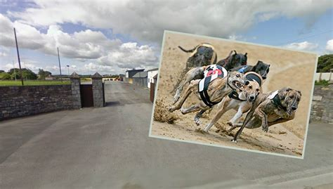 dragon boat racing kilkenny greyhound racing in kilkenny tonight